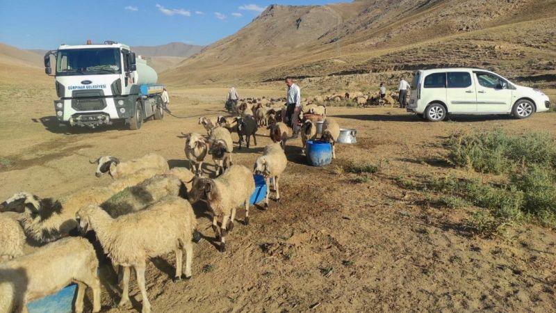 Gürpınar Belediyesi koyunları telef olmaktan kurtardı