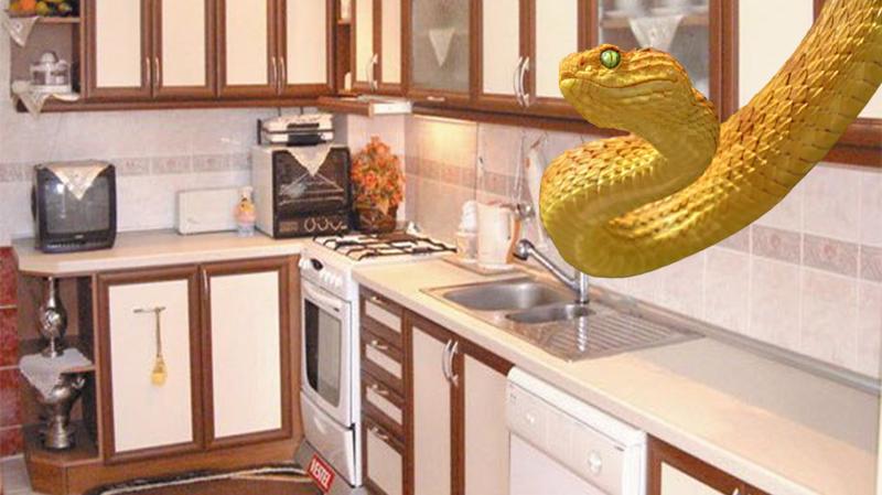 Yemek yapmak için girdiği mutfakta 1 metrelik yılanla karşılaştı!