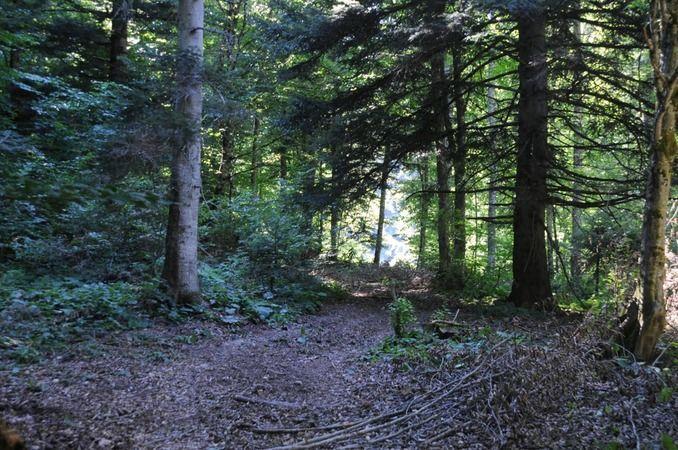 Geyve Ormanlarında Sıklık Bakımı Sürüyor...