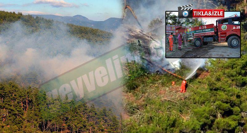Pamukova'da orman yangını..!