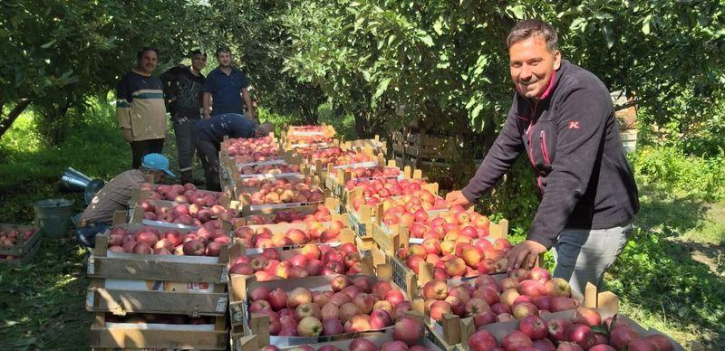Elma'da hasat başladı ama üretici memnun değil!