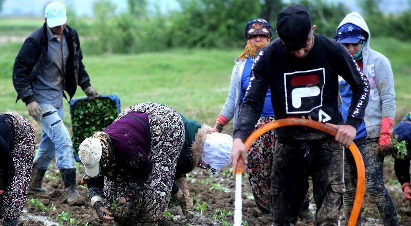 Çiftçiler Cumhurbaşkanı için üretecek
