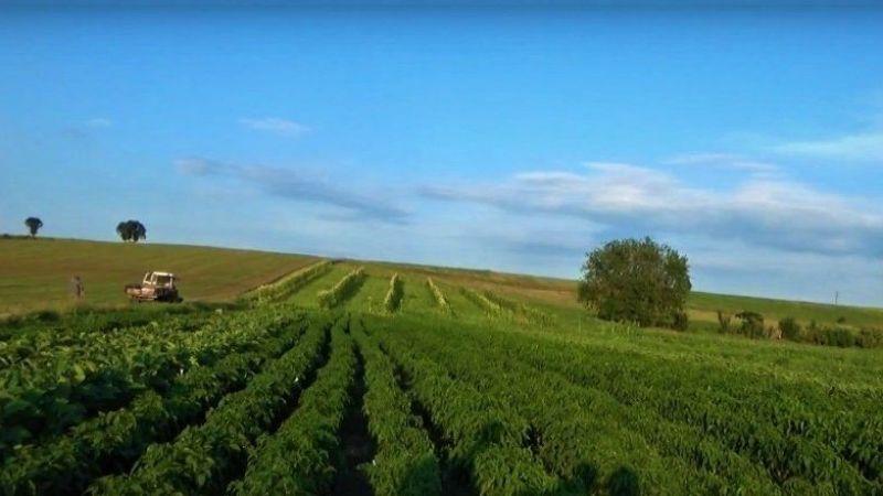 Tarım-ÜFE Temmuz'da arttı