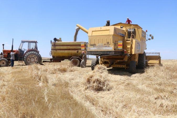 Barış Pınarında sezonun ilk hasat sevinci