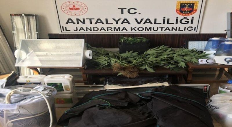 Antalya'da özel düzenekle uyuşturucu yetiştirilen eve baskın