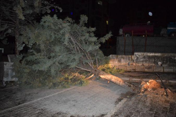 Yağış sebebiyle ev duvarı ve ağaçlar devrildi
