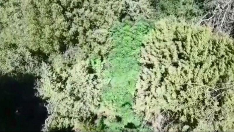 Ormanlık alana 'drone'lu operasyon