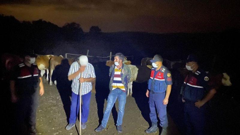 Kaybolan 10 büyükbaşı jandarma buldu