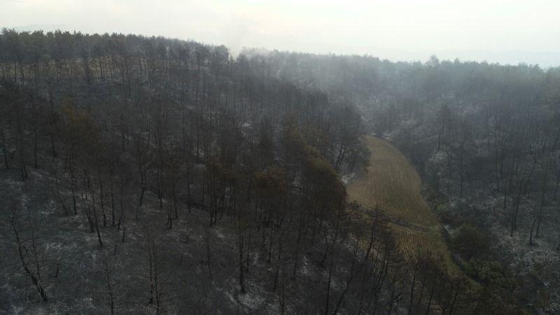 Bakan Pakdemirli: 450 hektarlık alan etkilendi