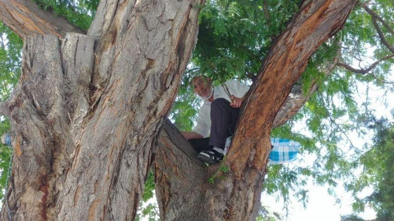Oturacak yer bulamayan vatandaş ağaca çıktı