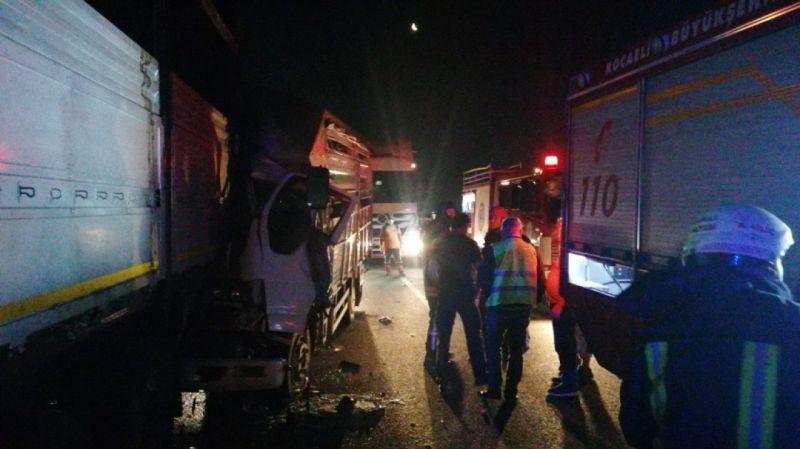 TEM'de trafik kazası: Çok sayıda hayvan telef oldu