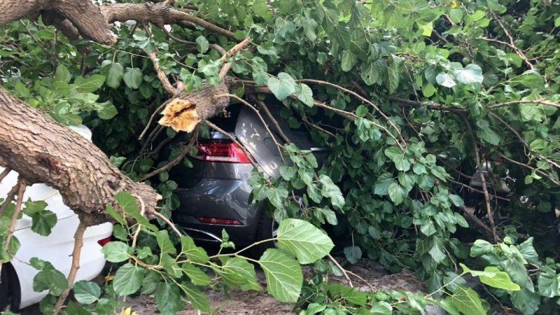 Çürüyen ağaç araçların üstüne devrildi