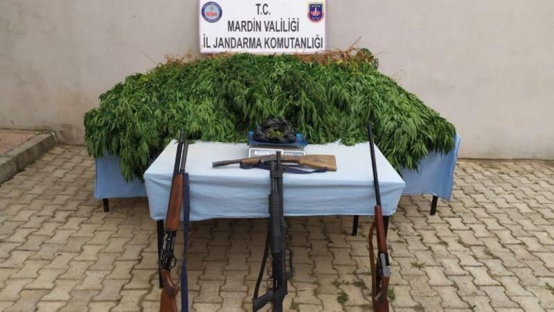 Mardin'de tarlasına kenevir eken zanlı tutuklandı