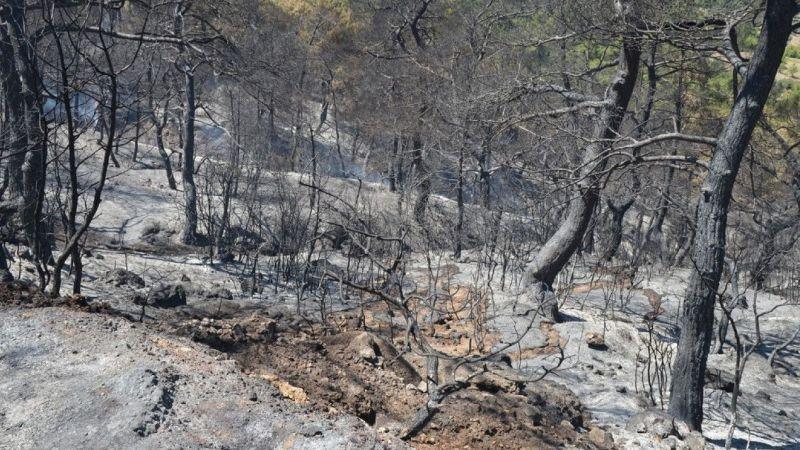 35 hektar orman kül oldu