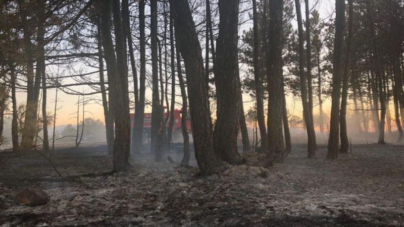 Balya makinesinden sıçrayan kıvılcım ormanı yaktı
