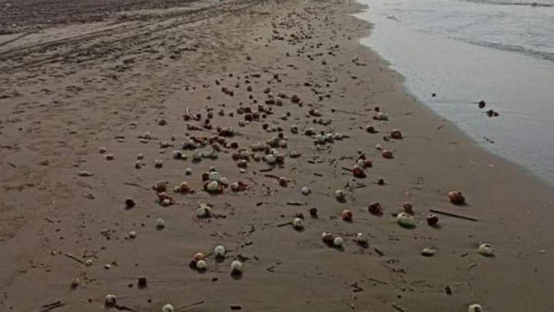 Yüzlerce kilo soğan sahile vurdu