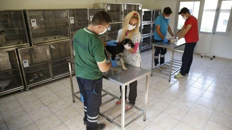 Konak'ta soğuk kış günlerinde hayvanların mağdur olmaması için hazırlıklar tamam | Son Dakika Haber