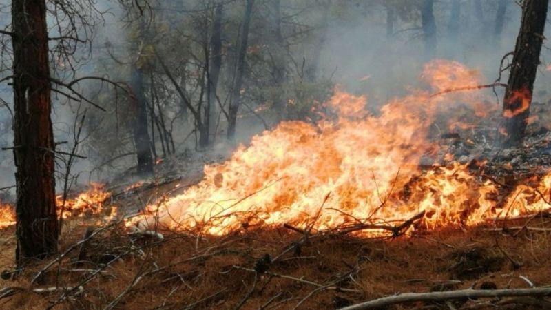 Tokat'ta orman yangını çıktı