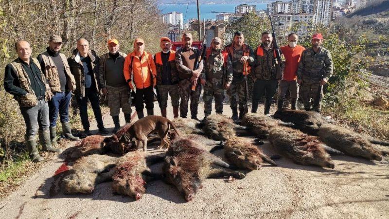 Ordu Fatsa'da dev domuzlar avlandı