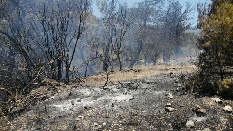Datça'da çıkan yangında 10 dönüm zirai alan zarar gördü | Son Dakika
