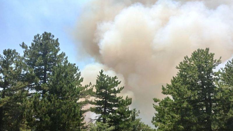Kütahya'da orman yangını çıktı | Son Dakika