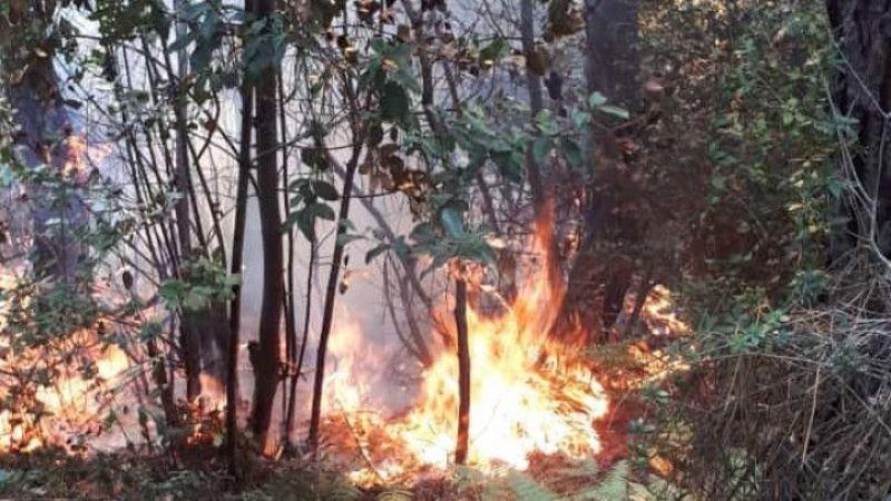 Beykoz'da ormanlık alanda çıkan yangın söndürüldü | Son Dakika