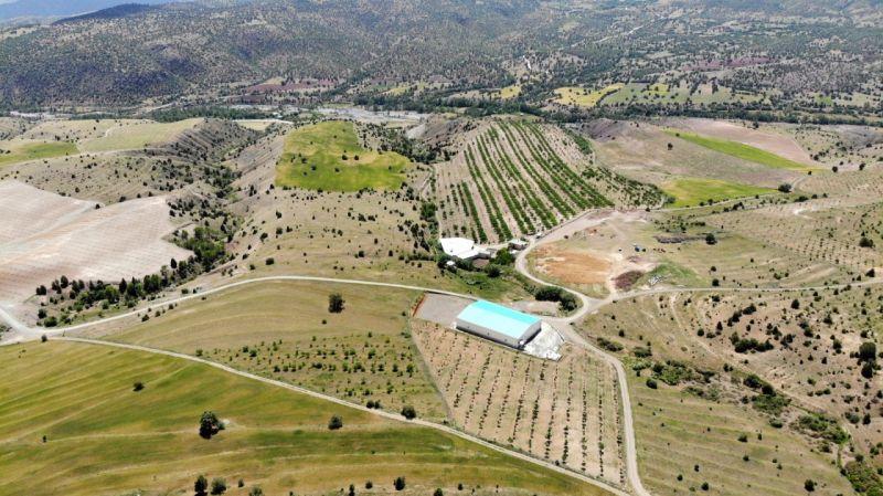 İstanbul'u terk eden işadamı, köyüne dönerek bin 300 dönümlük araziye 28 bin ceviz ağacı dikti | Son Dakika