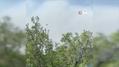 Kazdağları'ndaki yangına 7 helikopter bir uçakla müdahale ediliyor |Son Dakika
