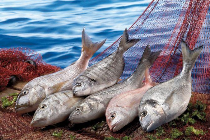 Şimdi balık zamanı   Son Dakika