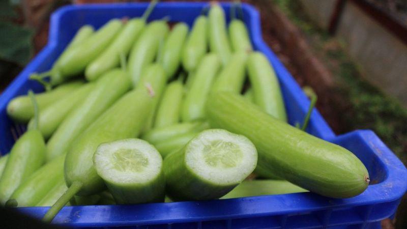 Ağustos'ta fiyatı en fazla artan ürün salatalık oldu  Son Dakika