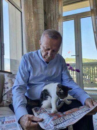 Cumhurbaşkanı Erdoğan torununun kedisiyle olan fotoğrafını paylaştı   Son Dakika