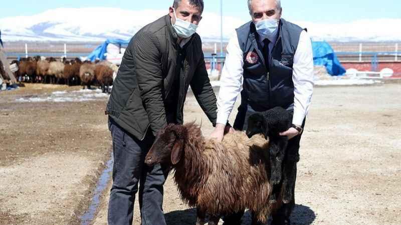 Erzurum çiftçisine MÜJDE! Anaç koyun keçi desteği...