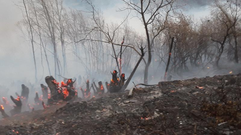 Muğla ve İzmir'de orman yangını!