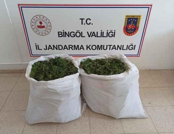 Bingöl'de bin 473 kök kenevir ile 23 kilo skunk ele geçirildi