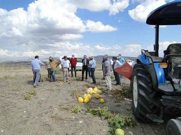 Arguvan'da çerezlik kabak hasadına başlandı