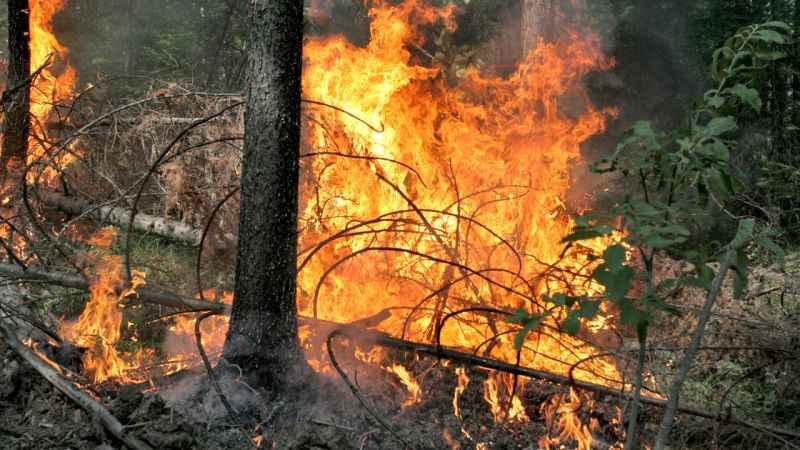YPG/PKK'lı teröristten orman yangınlarıyla ilgili itiraf! bakın ne için yapmış !