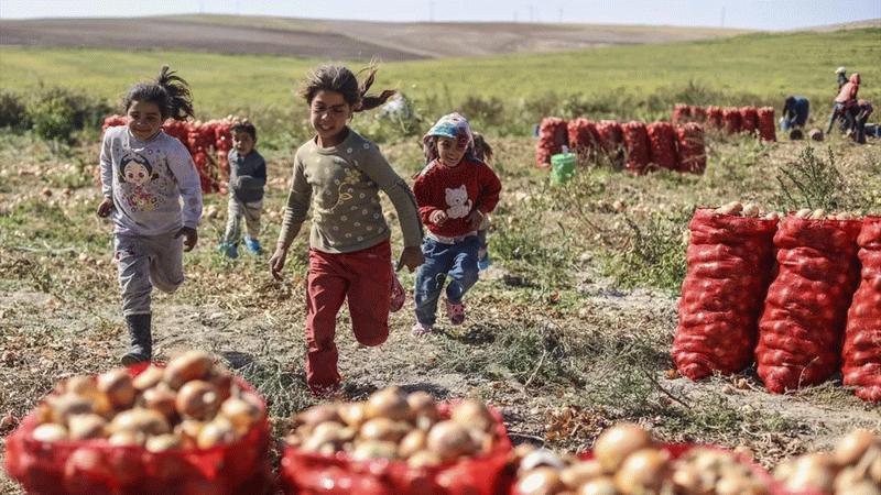 """Mevsimlik tarım işçileri, zor şartlarda çalışmalarını sürdürüyor!  """"Gölgemiz bile yok"""""""
