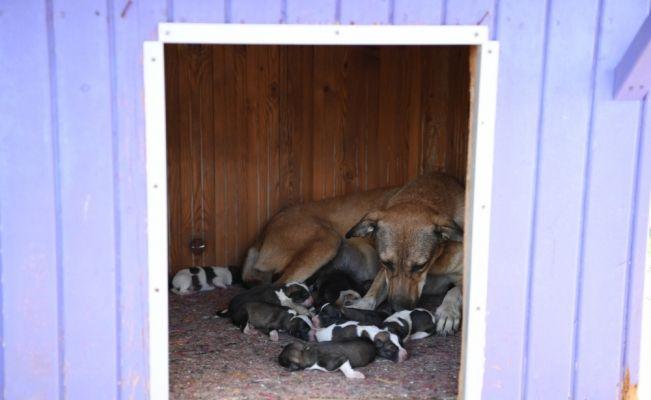 Tahliye borusuna sıkışan 4 köpek yavrusu kurtarıldı
