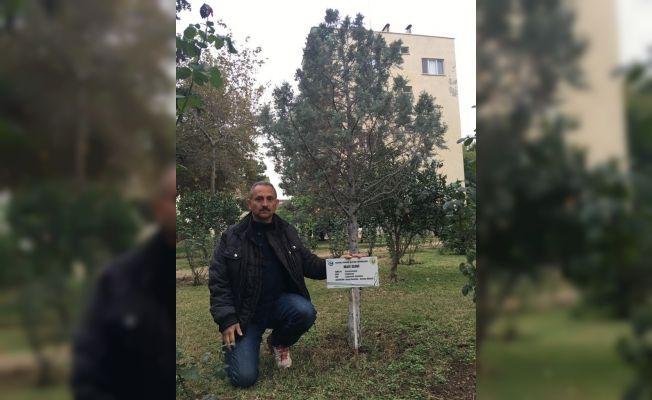 Erdemli'de ağaçlara kimlik çıkartıldı