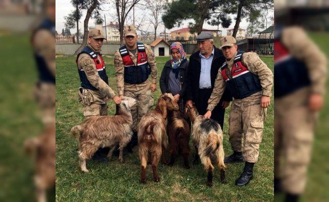 Kahramanmaraş'ta hayvan hırsızlığı iddiası