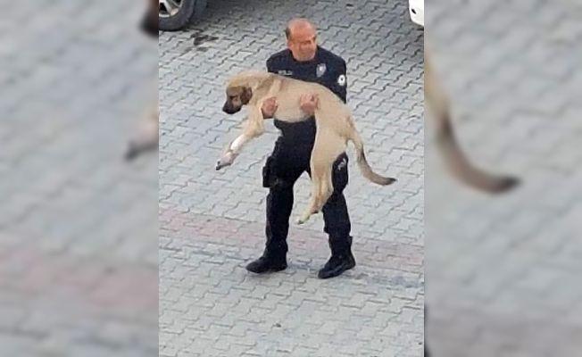 Polis, yaralı köpeği kucağında veterinere taşıdı