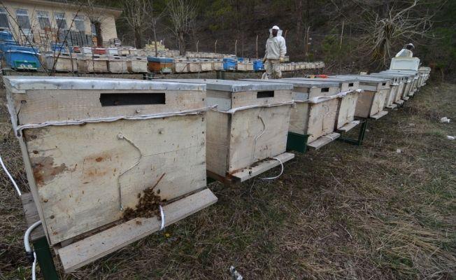 Kışlatma döneminde arı ölümlerini engelleyecek sistem