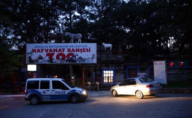 Antalya'da hayvanat bahçesinden kurt kaçtı
