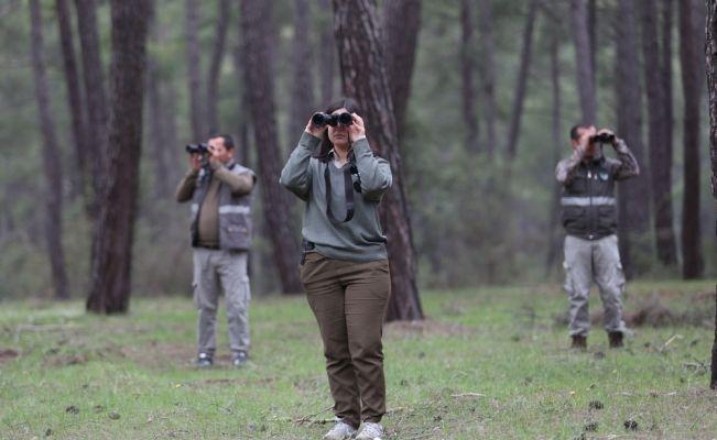 """""""Firari kurt"""" ormanlık alanlarda aranıyor"""