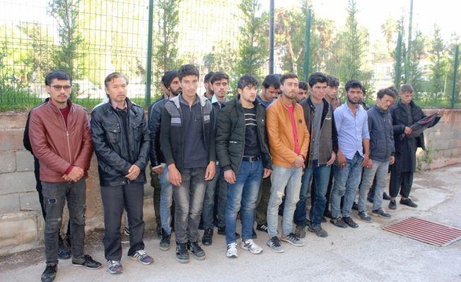 Osmaniye'de düzensiz göçmen operasyonları