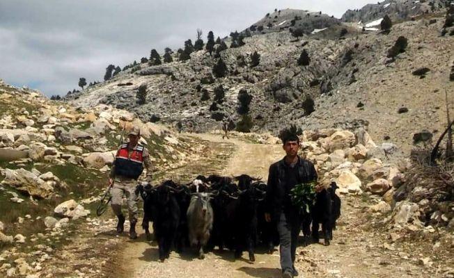 Ahırdan kaçan keçiler, güvenlik kameralarına yakalandı