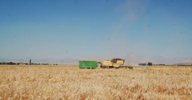 Afşin'de 35 dekar alanda üretimi yapılan siyez buğdayında hasat başladı