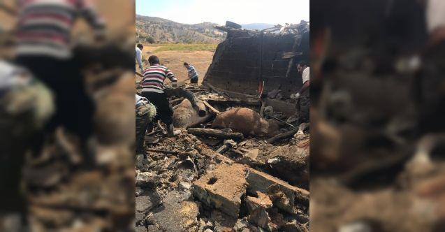 Kahramanmaraş'ta ahır yandı! 12 büyükbaş hayvan telef oldu...