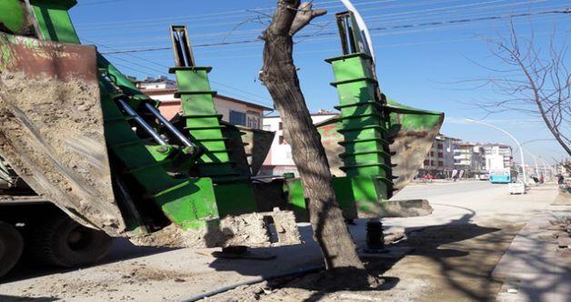 Elbistan belediyesi yol genişletme çalışmalarında sökülen ağaçları parklara taşıyor