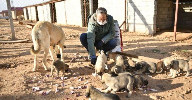 Elbistan Belediyesi sokak hayvanlarını unutmadı